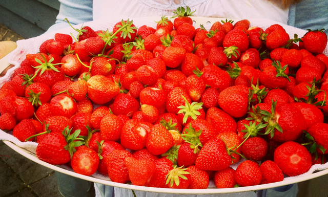 Bumper crop of strawberries from my parents' garden this year © Mum / Earthbornliving